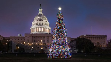 Capitol Christmas Tree.Keelan Government Regulations Snag Us Capitol Christmas
